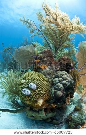 Underwater coral reef off the coast of Roatan Honduras - stock photo