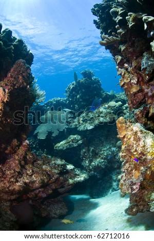 Underwater coral reef off the coast of Roatan Honduras Jackson hole - stock photo