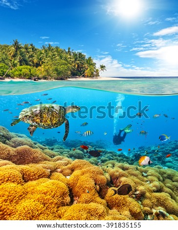 Underwater coral reef with scuba diver and turtle - stock photo