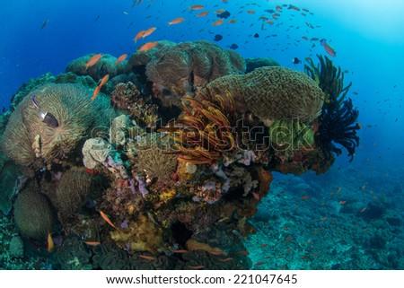Underwater Coral Scene - stock photo