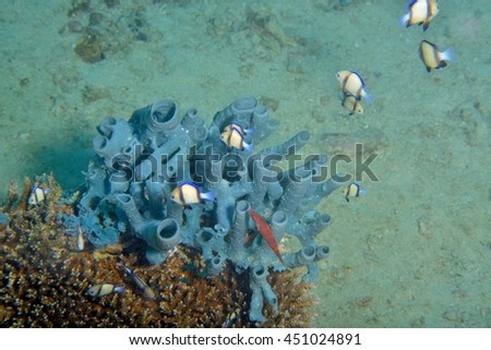 underwater coral wallpater - stock photo