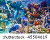 Underwater - Corals - stock photo
