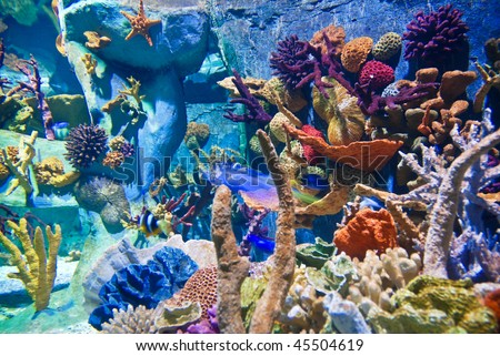 Underwater - Corals - stock photo