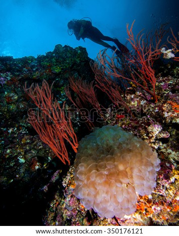Underwater deep blue sea and scuba diver  - stock photo