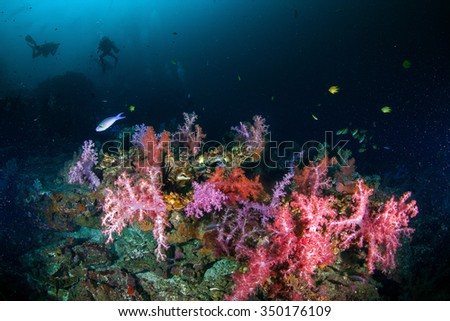 Underwater deep blue sea and soft coral  - stock photo
