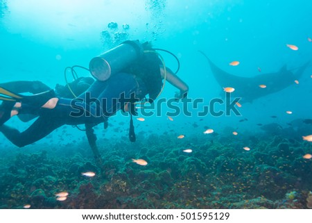 Underwater divers are watching manta rays at a cleaning station, Maldives