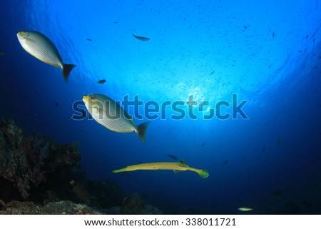 Underwater fish - stock photo