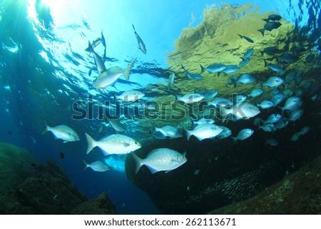 Underwater fish in ocean - stock photo