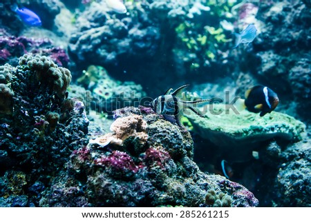 underwater image of colorful tropical fishes - stock photo