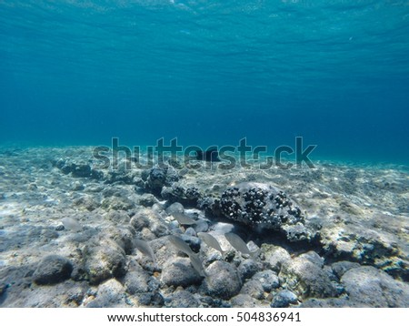 Underwater image of fish swimming through clear water off a Greek Island
