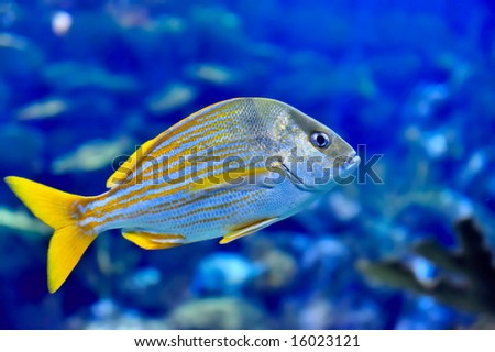 underwater image of fishes