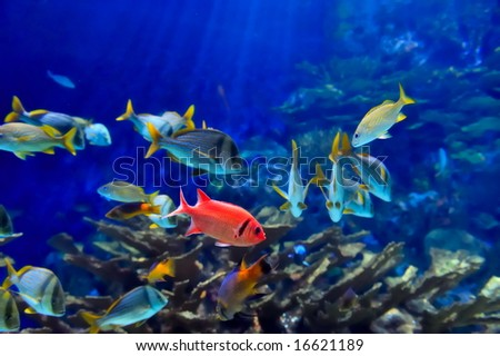 underwater image of reef and tropical fishes - stock photo