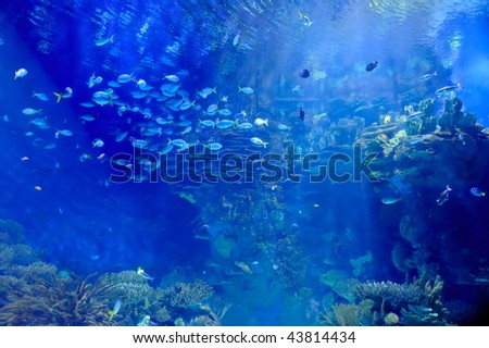 underwater image of tropical fishes - stock photo