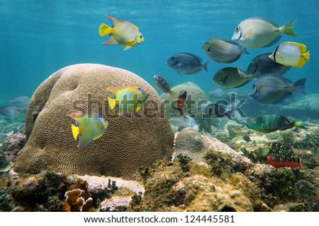 Underwater in a reef of the Caribbean sea with brain coral and a shoal of colorful tropical fish - stock photo