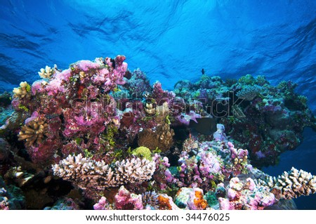 Underwater landscape. - stock photo