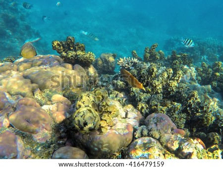 Underwater landscape, Coral reef with tropical fishes, coral fishes, reef fishes, coral reef life, sea life, sea animals, summer holiday activity, snorkeling in coral reef, clean sea with fishes - stock photo