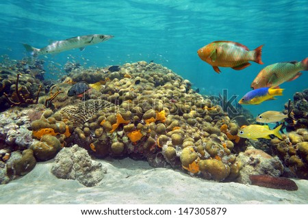 Underwater landscape in a coral reef with with colorful tropical fish and water surface in background - stock photo
