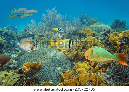 Underwater landscape in an healthy coral reef with colorful tropical fish - stock photo