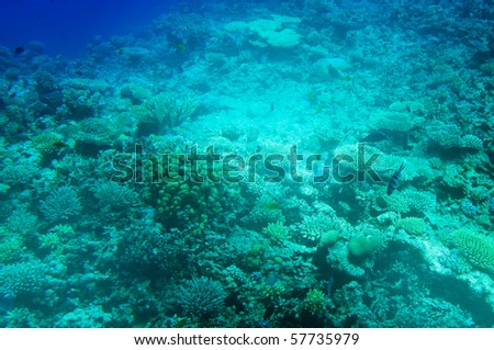 Underwater landscape of Red Sea. - stock photo