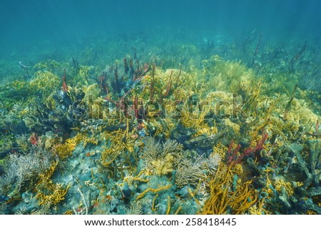 Underwater landscape on a lush and colorful coral reef of the Caribbean sea - stock photo