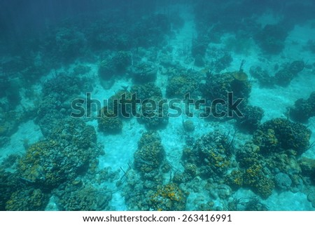 Underwater landscape over a coral reef viewed from above in the Caribbean sea - stock photo