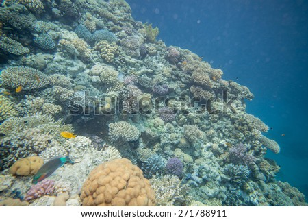 Underwater landscape. Red sea coral reef. Different corals - stock photo