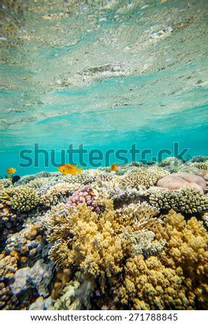Underwater landscape. Red sea coral reef.  Water surface - stock photo