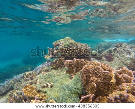 Underwater landscape, View to coral reef Apo island, Philippines. Tropical fishes in blue water. Exotic marine life. Snorkeling near tropic island Apo. Summer vacation activity - snorkeling in lagoon - stock photo