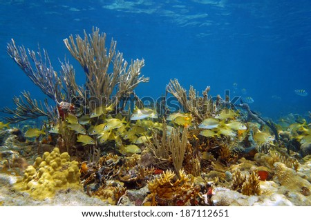 Underwater landscape with a shoal of tropical fish in a colorful coral reef, Atlantic ocean, Bahamas islands - stock photo