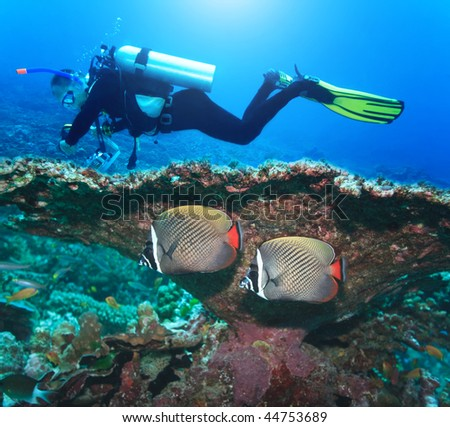 Underwater landscape with couple of Angelfishes and diver - stock photo