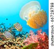 Underwater landscape with couple of  Butterflyfishes and jellyfish - stock photo