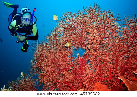 Underwater landscape with scuba diver and gorgonian coral - stock photo