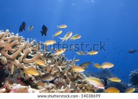 Underwater landscape with small fishes and coral. Borneo
