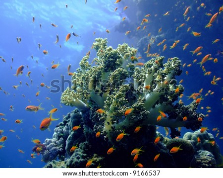 Underwater landscape with soft coral. Red Sea - stock photo