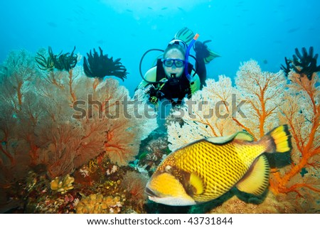 Underwater landscape with triggerfish, diver and gorgonian coral - stock photo