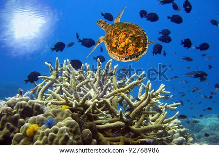 Underwater landscape with turtle - stock photo
