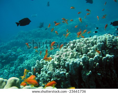 Underwater life, corals and fishes - stock photo