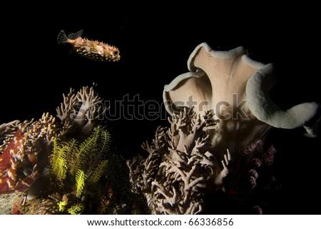 Underwater life, night underwater shooting - stock photo