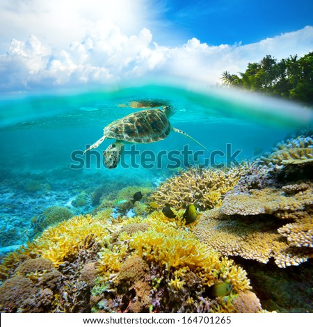 Underwater life of a coral reef. - stock photo