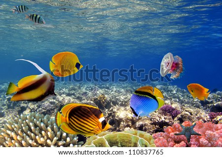 Underwater life of a coral reef, Red Sea, Egypt. - stock photo