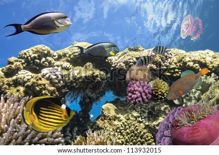Underwater life of a coral reef, Red Sea, Egypt - stock photo