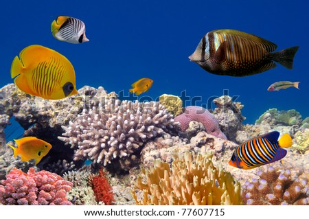 Underwater life of a hard-coral reef, Red Sea, Egypt - stock photo