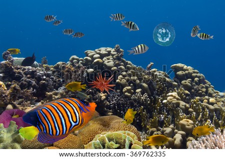 Underwater life of Red sea in Egypt - stock photo