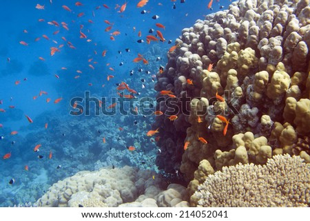 Underwater life of Red sea in Egypt. Saltwater fishes and coral reef. Fish school in blue water - stock photo