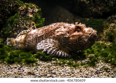 Underwater life, weird strange ugly fish  - stock photo