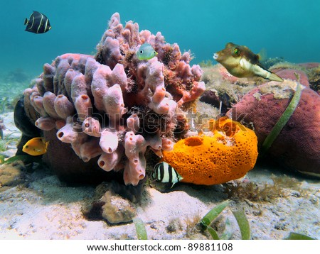 Underwater marine life, colorful sea sponges and tropical fish in the Caribbean sea