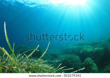 Underwater Ocean Seaweed - stock photo