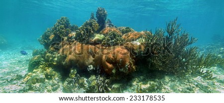 Underwater panorama in a coral reef of the Caribbean sea - stock photo
