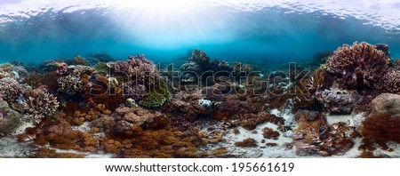 Underwater panorama of the vivid coral reef in tropical sea. Bali Barat National Park, Indonesia - stock photo