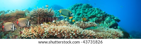 Underwater panorama with coral and fishes. Andaman sea. Merged from 5 images - stock photo